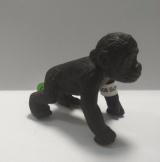 Gorilí mládě